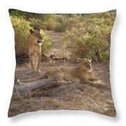 Lazy Samburu Afternoon Throw Pillow