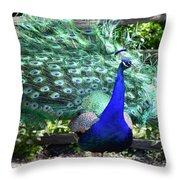 Le Peacock Throw Pillow