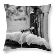 Lead A Horse To Water Throw Pillow
