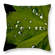 Leaf Covered In Raindrops Throw Pillow