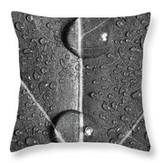 Leaf Dew Drop Number 10 Bw Throw Pillow