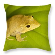Leaf Frog Savvy Throw Pillow
