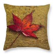 Leaf In The Rain Nature Photograph Throw Pillow