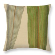 Leaf Of A Mountain Cabbage Tree Or Bush Flax Throw Pillow