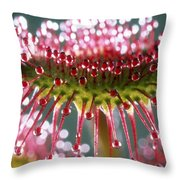 Leaf Of Sundew Throw Pillow by Nuridsany et Perennou and Photo Researchers