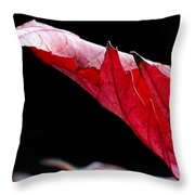 Leaf Study IIi Throw Pillow