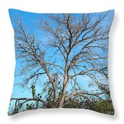 Leafless In Autumn Throw Pillow