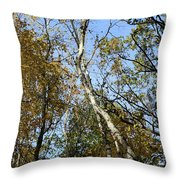 Leaning Birch Throw Pillow