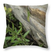 Leaping Lizard Throw Pillow