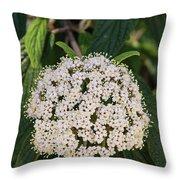 Leatherleaf Viburnum Throw Pillow