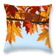 Leaves Autumn Orange Sunlit Fall Leaves Blue Sky Baslee Troutman Throw Pillow