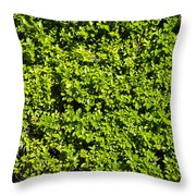 Privacy Hedge Throw Pillow