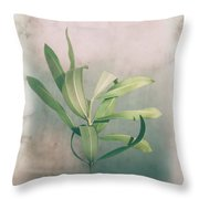 Leaves In Frame Throw Pillow
