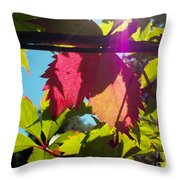 Leaves In Sunlight 6 Throw Pillow