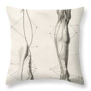Leg Nerve, 18th Century Illustration Throw Pillow