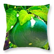 Lemon Or Lime Throw Pillow