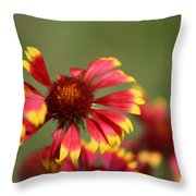 Lemon Yellow And Candy Apple Red Coneflower Throw Pillow