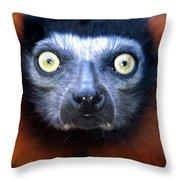 Lemur Glare Throw Pillow