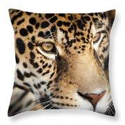 Leopard Face Throw Pillow by John Wadleigh