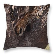 Leopard In Tree Throw Pillow