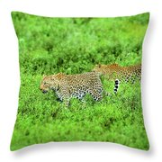 Leopard On The Move Throw Pillow