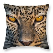 Leopard Panthera Pardus, Ndutu Throw Pillow