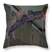Leopard Tree Cat Preying Throw Pillow