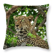Leopard With Piercing Eyes Throw Pillow
