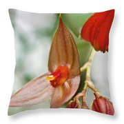 Lepanthes Maduroi Orchid Throw Pillow