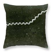 Leptospira, Sem Throw Pillow