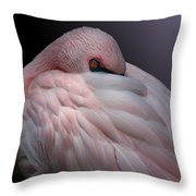 Lesser Flamingo Resting Throw Pillow