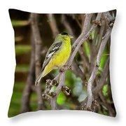 Lesser Goldfinch H57 Throw Pillow