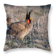 Lesser Prairie Chicken Displaying Throw Pillow