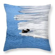 Let Sleeping Ducks Lie Throw Pillow