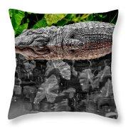 Let Sleeping Gators Lie - Mod Throw Pillow