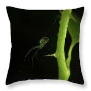 Leucauge On Greenbrier Vine Throw Pillow