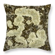 Lichen Design Throw Pillow