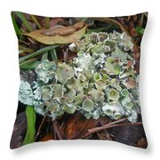 Lichen On Dead Branch Outer Banks North Carolina Usa Throw Pillow