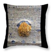 Lichen On The Trees 1 Throw Pillow
