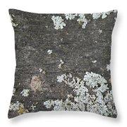 Lichen On Wood Throw Pillow