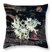 Lichen Throw Pillow
