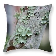 Lichens 2 Throw Pillow