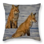 Licking Her Chops Hdr Throw Pillow