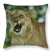 Licking Lion Throw Pillow