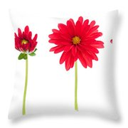 Life And Death Of A Dahlia Throw Pillow