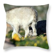 Life Begins In The Spring Throw Pillow