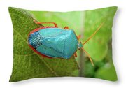 Life In The Cloud Forest 4 Throw Pillow