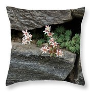 Life On Bare Rock - Pale Pink Succulents On The Wall Throw Pillow