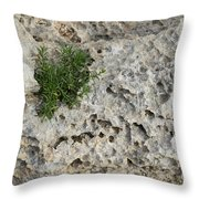 Life On Bare Rock - Pockmarked Limestone And Thyme Throw Pillow