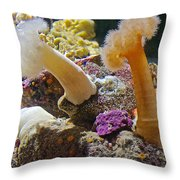 Life Under The Sea In Monterey Aquarium-california Throw Pillow
